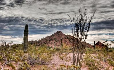 desert-cactus-ocotillo-2