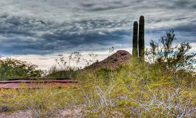 desert-cactus-landscape-2-1