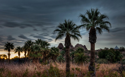 desert-palm-trees-1