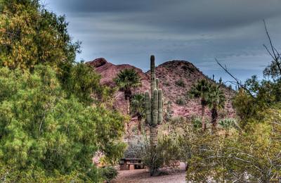 desert-cactus-landscape-1