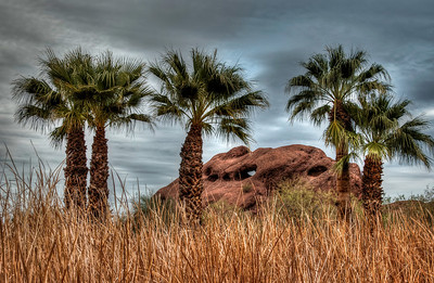 papago-park-palms-2-2