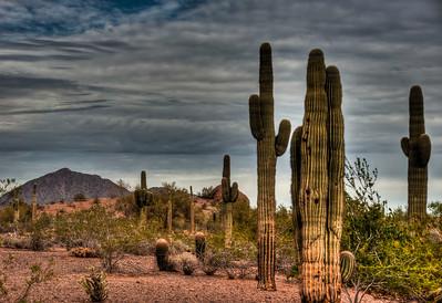 desert-cactus-landscape-3-1