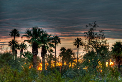 palm-tree-sunrise-1