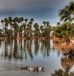 ducks-pond-palm-trees-1-2