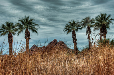 papago-park-palms-1