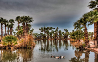 ducks-pond-palm-trees-1