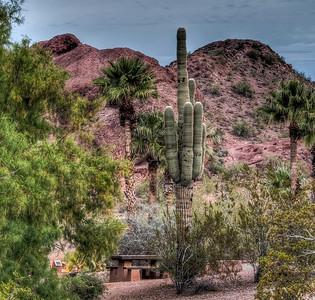 desert-cactus-landscape-1-2