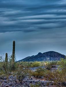 stormy-desert-cactus-2-1