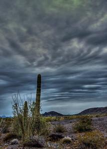 stormy-desert-cactus-4-3