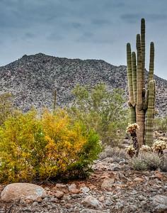 desert-saguarto-cactus-1