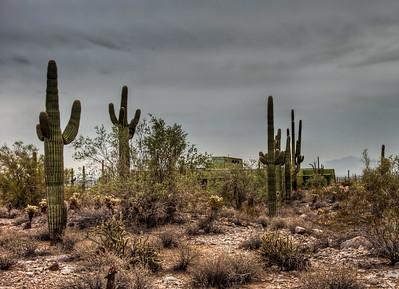 desert-saguaro-cactus-8-1