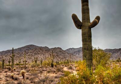 desert-saguaro-cactus-5-2