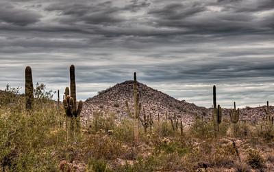 desert-saguaro-cactus-3-1