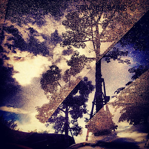 Double exposure, trees and puddles