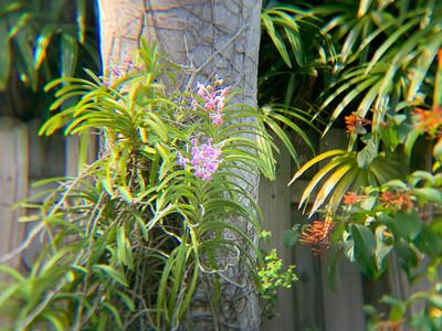 flowers telephoto