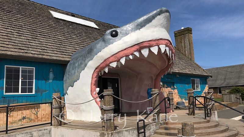 Fun store in Ocean Shores, WA
