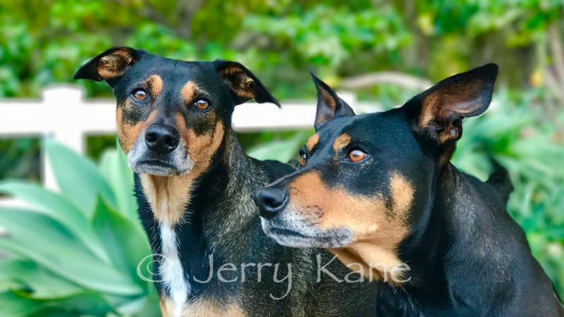 Wilson & Ruby on guard duty