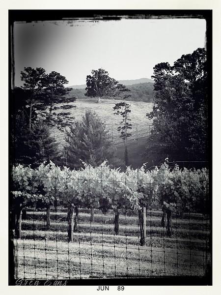 Vineyard at Biltmore Estate, Asheville, NC