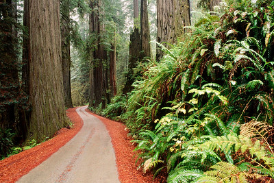 Redwood National Park. California. USA