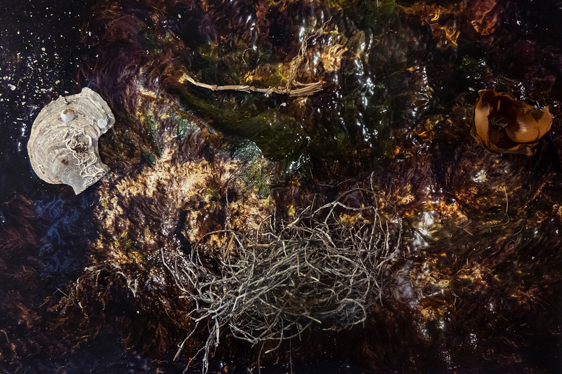 every being is an island <br /> nature mort IV,  2020-21 <br /> color photograph <br /> 36 x 24 inches (91 x 61cm)