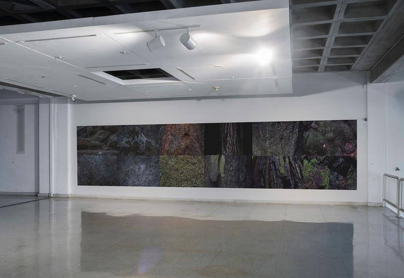 Senescere, 2013-2019<br /> Installation view at Museo de Arte Contemporáneo del Zulia (MacZul)