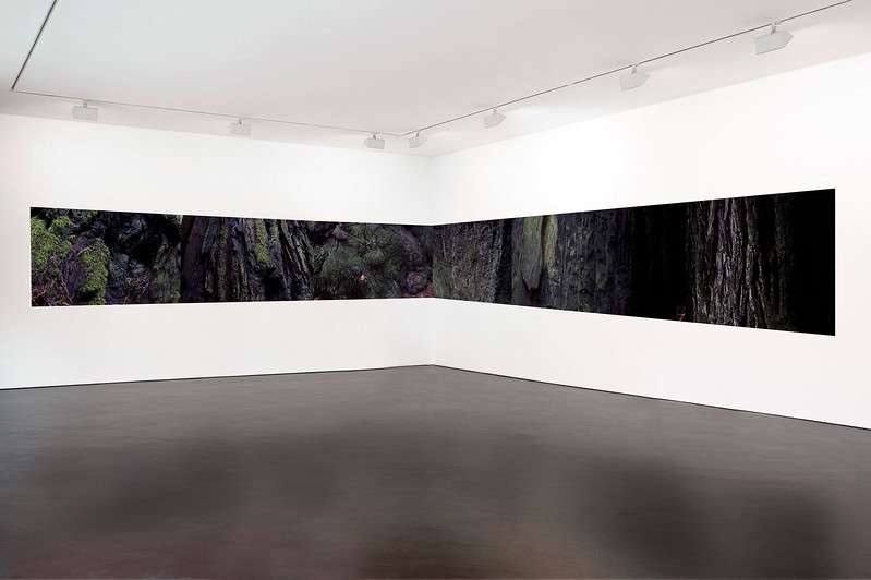 muirwoods I, 2014-15  (Installation model)<br /> 20 x 30 each (50 x 76 cm)