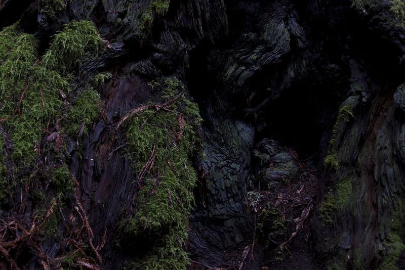 muirwoods VI, 2014-15<br /> 20 x 30 each (50 x 76 cm)