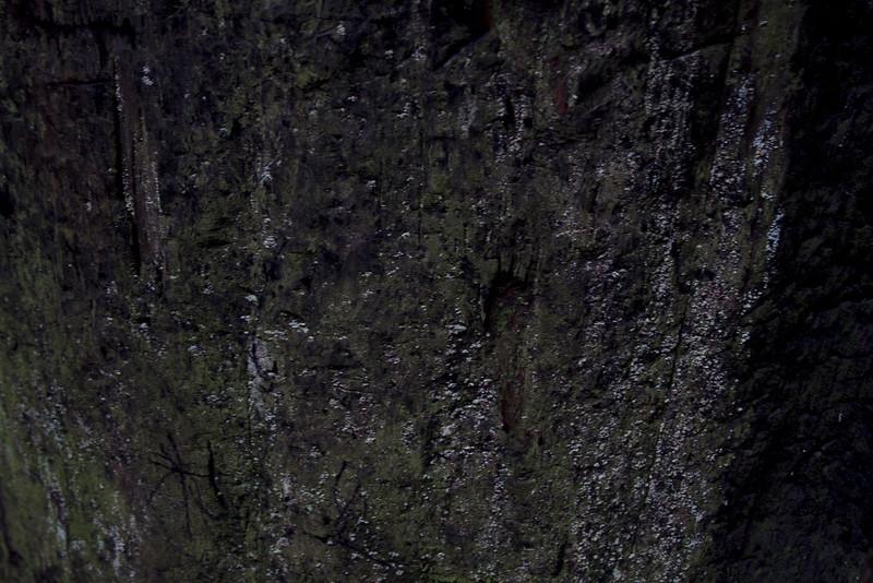 muirwoods III, 2014-15<br /> 20 x 30 each (50 x 76 cm)