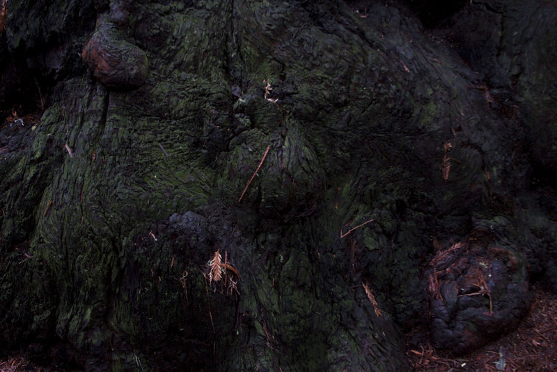 muirwoods IV, 2014-15<br /> 20 x 30 each (50 x 76 cm)