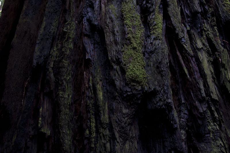 muirwoods V, 2014-15<br /> 20 x 30 each (50 x 76 cm)