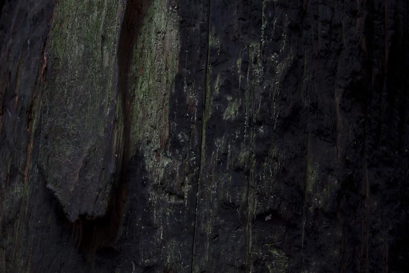 muirwoods II, 2014-15<br /> 20 x 30 each (50 x 76 cm)