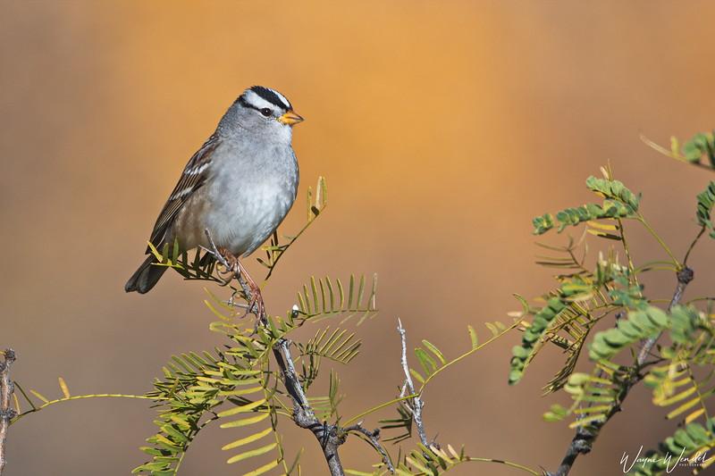 Sparrow's Perch