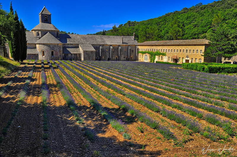Senanque Abbey in the Provence Region of France