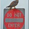 DO NOT ENTER......signed Osprey