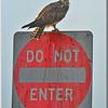 DO NOT ENTER......signed Osprey