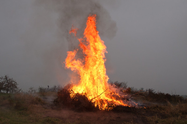 Burning apple tree prunings from last winter.