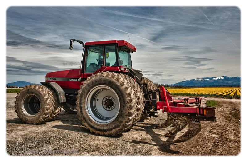 Tractor at the Daffodil Fields<br /> Mount Vernon, Washington