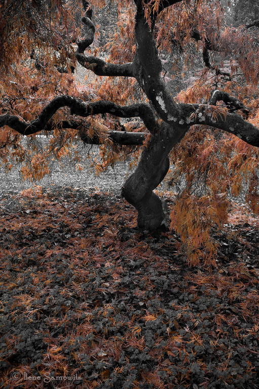11-29-12 Autumn Tree<br /> <br /> Sorry for being too tired to comment tonight.