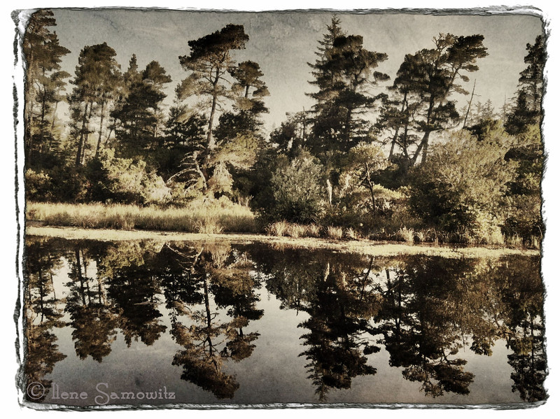 5-13-12 image taken with iPhone and processed with camera awesome.  We camped at this lagoon on the Oregon coast last night.  Near sunrise this morning the water was so still that I was able to capture this wonderful reflection.