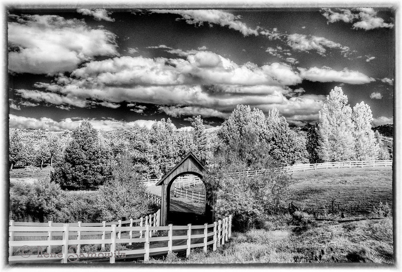 6-29-12 Black and White conversion of an infrared image of Pastoral Scene - This scene was found along Route 26 (Ochoco Highway) about 2 miles west of the turnoff for John Day Fossil Beds National Monument (Painted Hills).