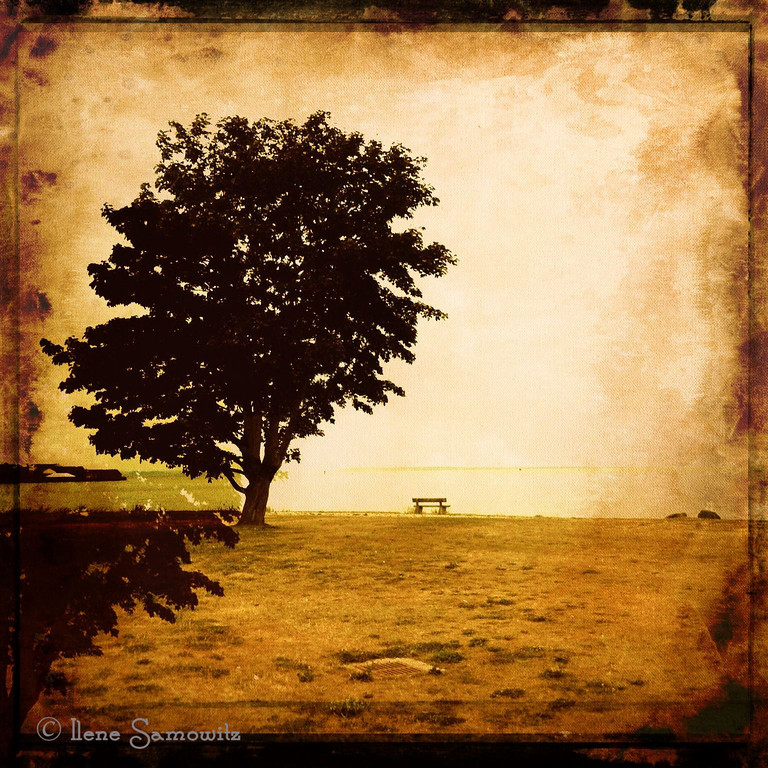 9-2-12 Facing Canada - Lone tree captured at a park in Blaine, WA facing Boundary Bay, the Peace Arch, and British Columbia, Canada. This lone tree was captured  on my iPhone 4 and post processed on my iPad.<br /> <br /> Critiques welcome