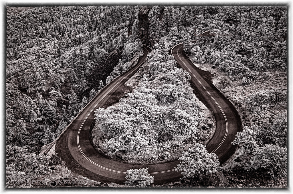 7-21-12 Atop at Rowena, Columbia Gorge, Oregon looking down at the road.  This was taken with my infrared converted D200.   This shows the design of the curve of the road that comes up from the east.  To the south is a beautiful view of the Gorge.  In April the fields here are ablaze with blue lupines and balsalm root.  I missed the show this year but this time had the treat of calm.  It was probably the least windy visit I have ever made to this wonderful place.