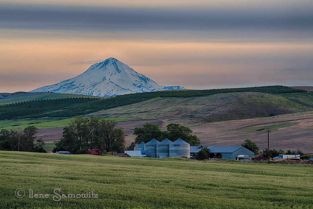 7-16-12 Evening light of the countryside wlith Mount Hood, This was taken along the road traveling back from the Rice elevator heading toward The Dalles, Oregon. (rice elevator was yesterday's pick).