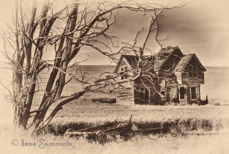 7-19-12 Antiqued Abandon House - I think this most likely will be the last in the series of the abandoned house.  I converted this in Silver Effex 2 and added a little bit of texture to help emulate the aged look of the image.  Thanks for all the comments on the close up and detailed version that I posted yesterday.  It continues to be fun to share this mini series.