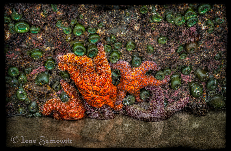 10-3-12 Bandon Tidepool.  This is a 5 stop hdr processed in photomatix pro and color effex 4.0.  I added a photoframe from on one in the acid controlled category.<br /> <br /> Critiques Welcome.