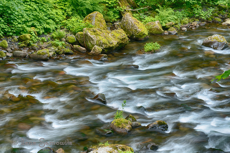 7-14-12 Eagle Creek, Columbia RIver Gorge, Oregon