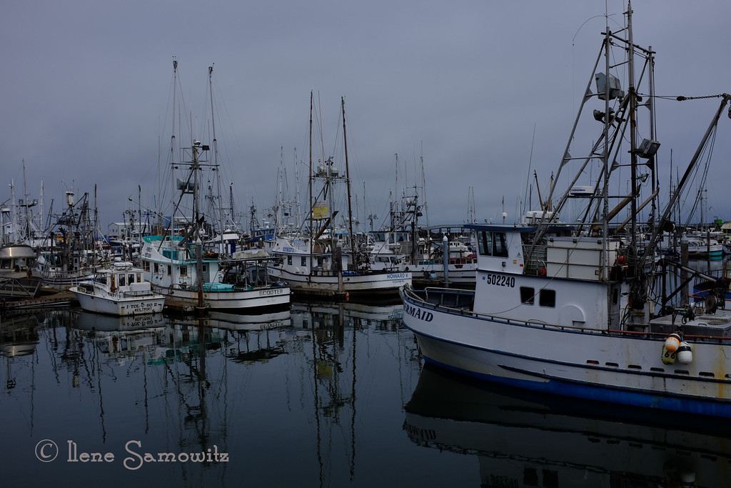 7-21-13 Taken with my Fuji x100s SOOC using RAW + fine jpeg with the Velvia setting. Still taken at Westport, WA this afternoon in overcast conditions.