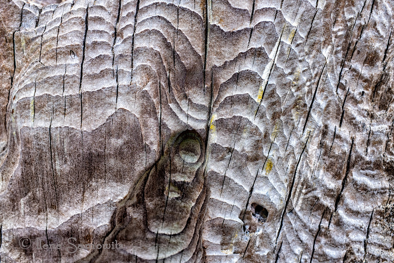 "8-19-13 Patterns of the Big Stump found on Big Stump Beach, Waldport, Oregon.  Here is a close up of the wood on the Big Stump (old redwood stump dated about 2000 years old).  The energy is amazing.<br /> <br /> <br /> <br /> <a href=""http://www.big-stump.com/"">http://www.big-stump.com/</a>"