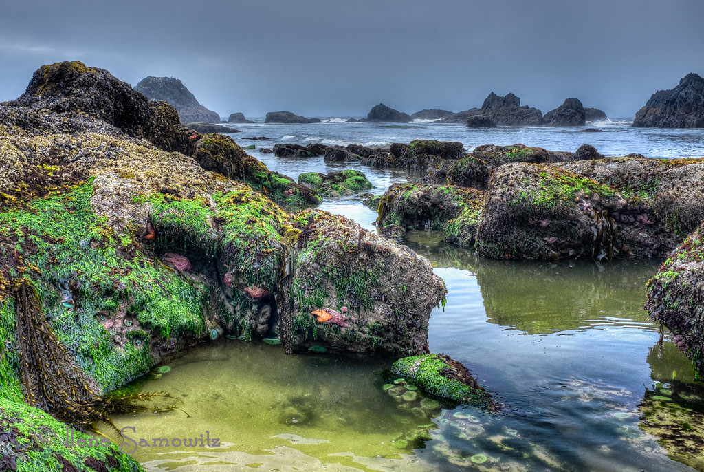 "8-24-13 G is for ""green algae"" and ""green anemones"". This is Seal Rock, Oregon."