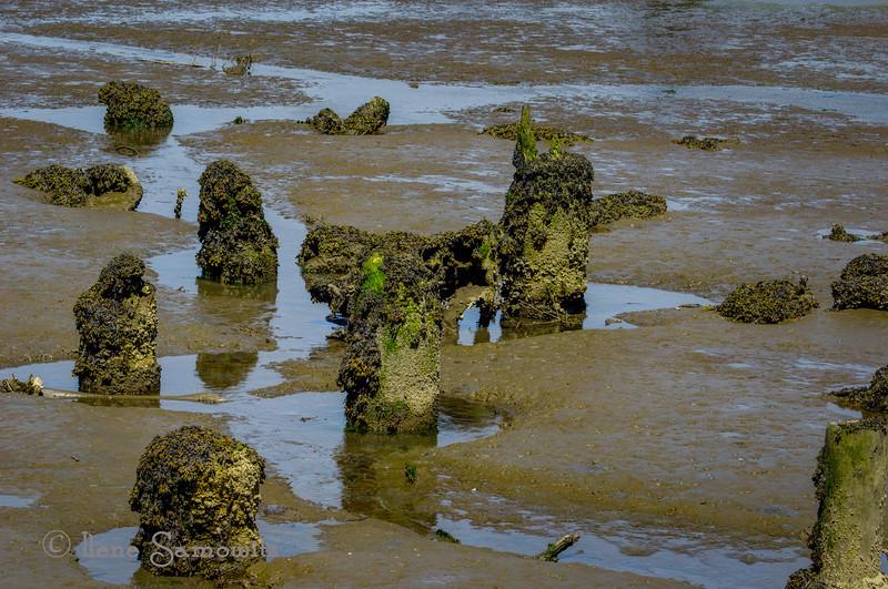 10-6-13 Low tide pilings